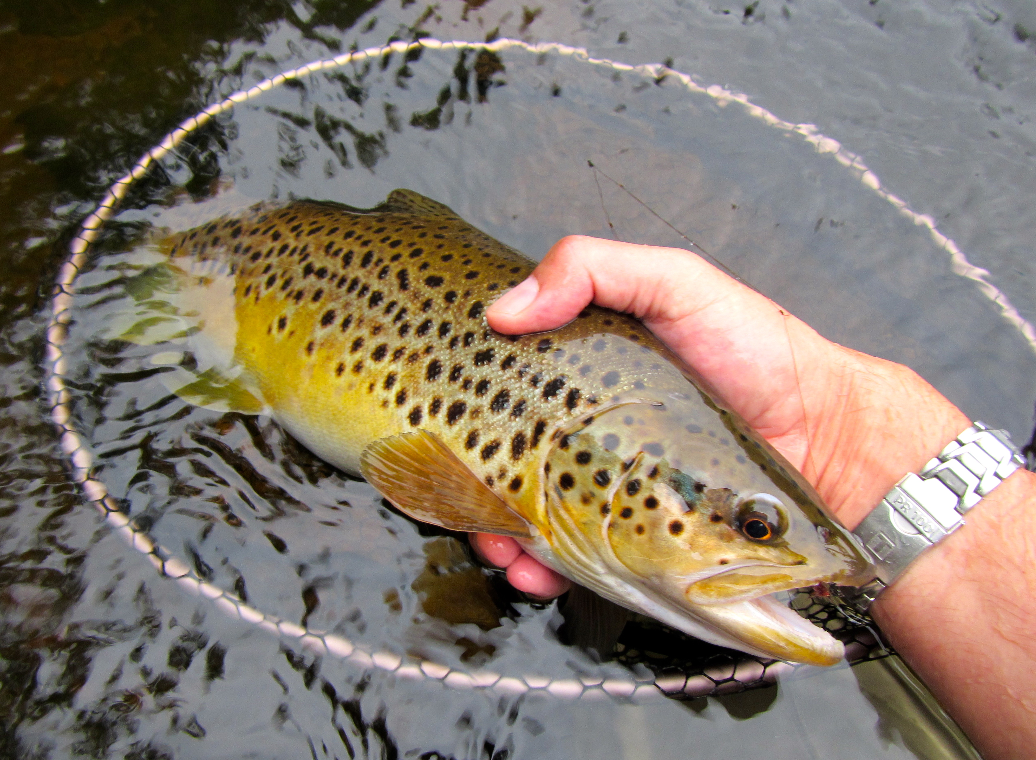 Fly tying class sunday 2 8 15 wet flies and fuzzy nymphs for Upcountry fly fishing