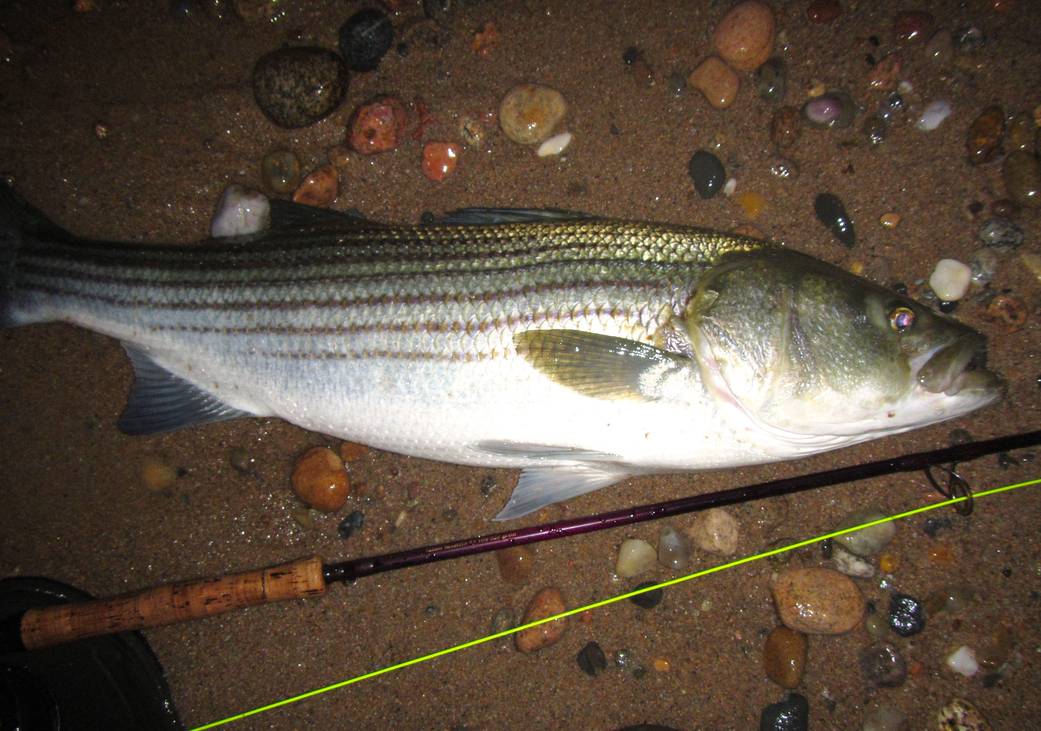 how to catch sand eels