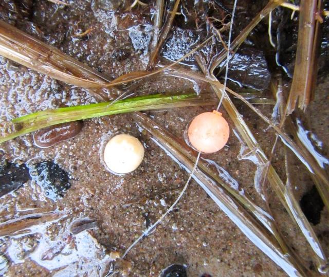 Bead&Egg 11-13