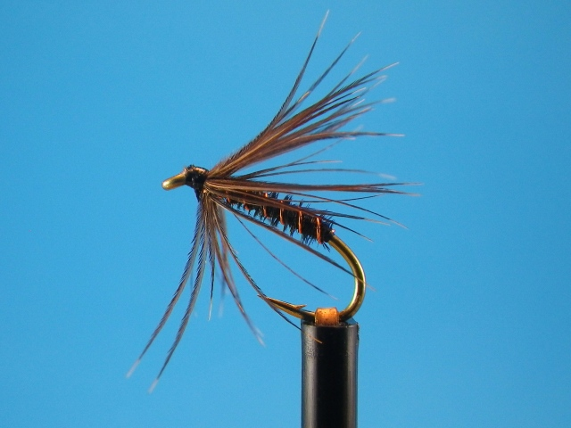 Black Caddis Spider