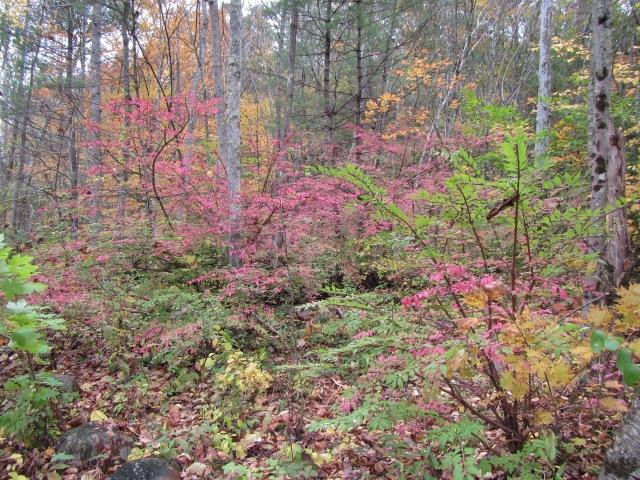 Farmington Foliage