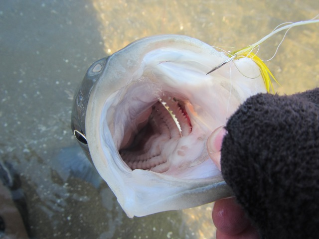 Little guy big mouth