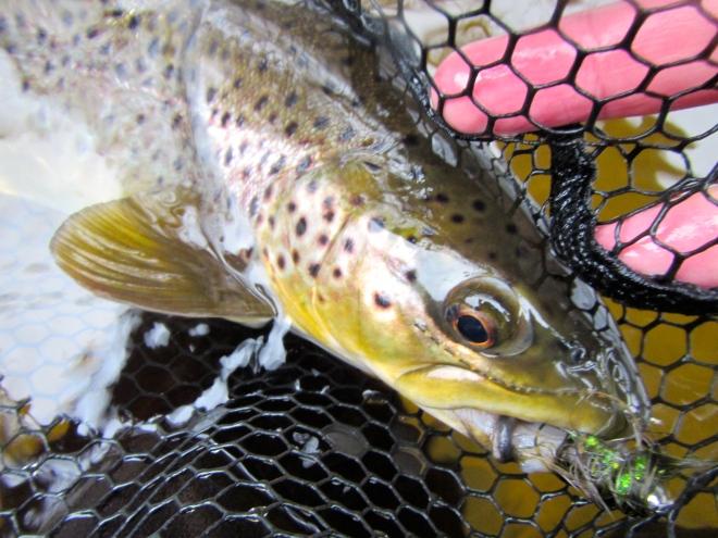 Winter Streamer Brown
