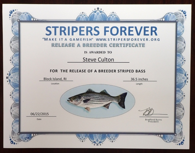 Stripers Forever Release A Breeder Club