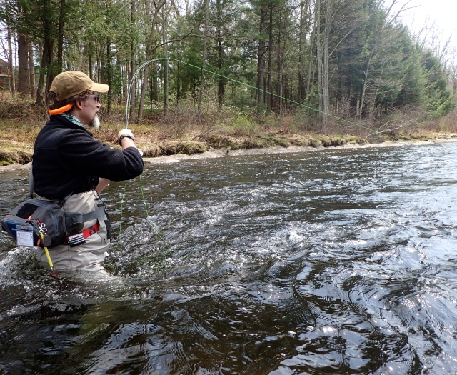 Squirrel and ginger caddis emerger currentseams for Farmington river fishing report