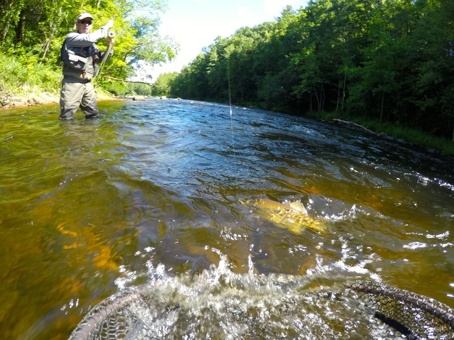 Wet flies for farmington river currentseams for Farmington river fishing report